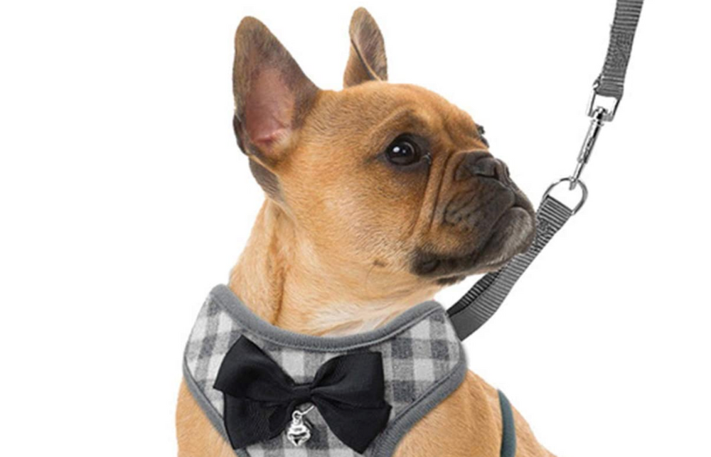 These Dog Harnesses Have the Highest Ratings on Amazon, and They're Cute, Too