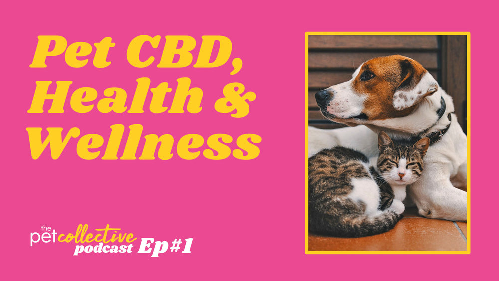The Pet Collective Podcast Episode 1: CBD, Health and Wellness