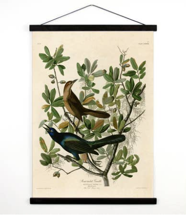 Vintage Natural History Bird Grackle Canvas Hanging 18 X24