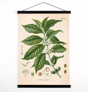 Vintage Botanical Coffee Plant Canvas Wall Hanging 18X24