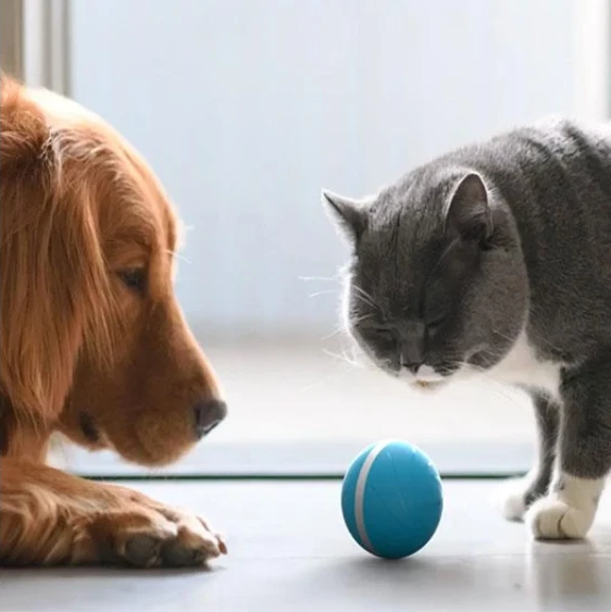 Pet intellectual ball(Buy two free shipping)