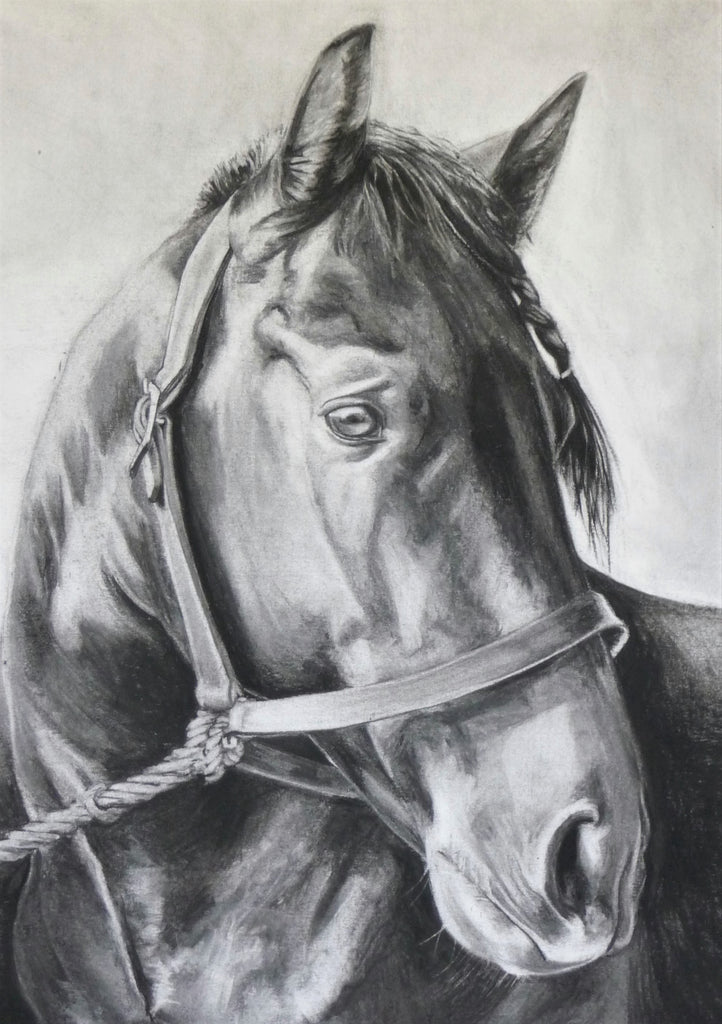 Alert -  Original Drawing of a Horse by Rebecca Rason Flor Ferreira