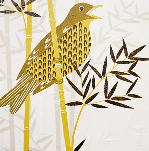 Thrush in Bamboo By Ashley Hutchinson
