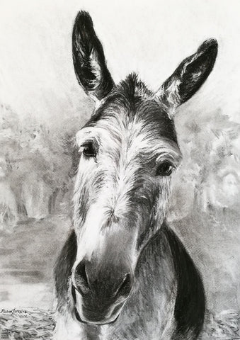 Curious Soul -  Original Drawing of a Donkey by Rebecca Rason Flor Ferreira