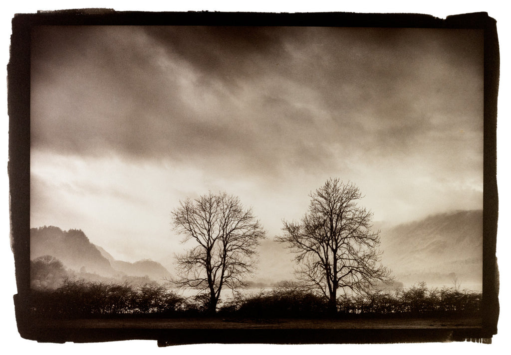 Derwentwater Trees by Bob Marshall