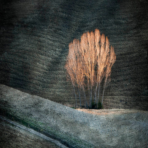 'Dark fields With Tree' by Linda Bembridge