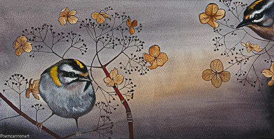Firecrests by Sam Cannon. Ltd. Edition Print