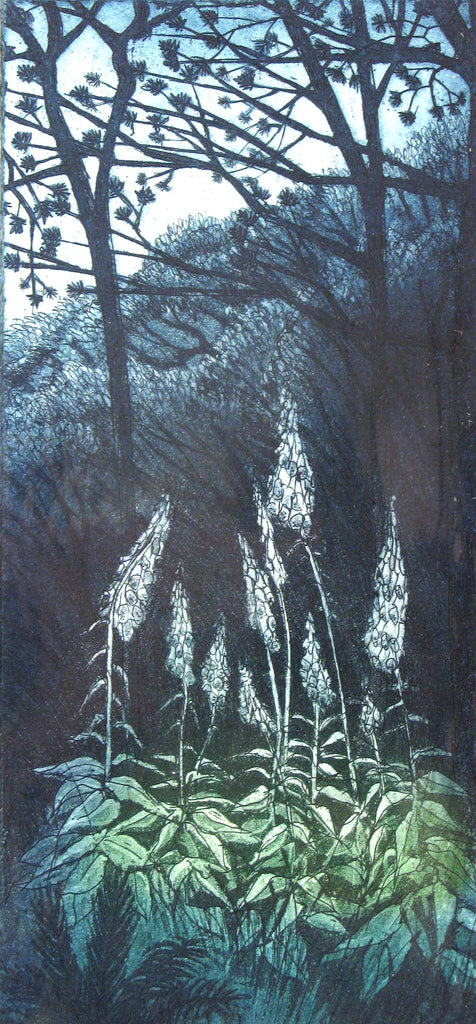 Forest Foxgloves, Morna Rhys