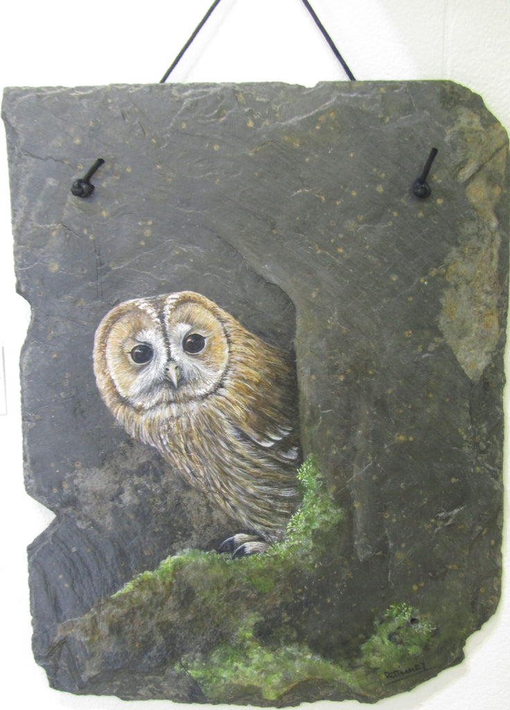 Tawny Owl - Painting on Slate by Rosemary Timney