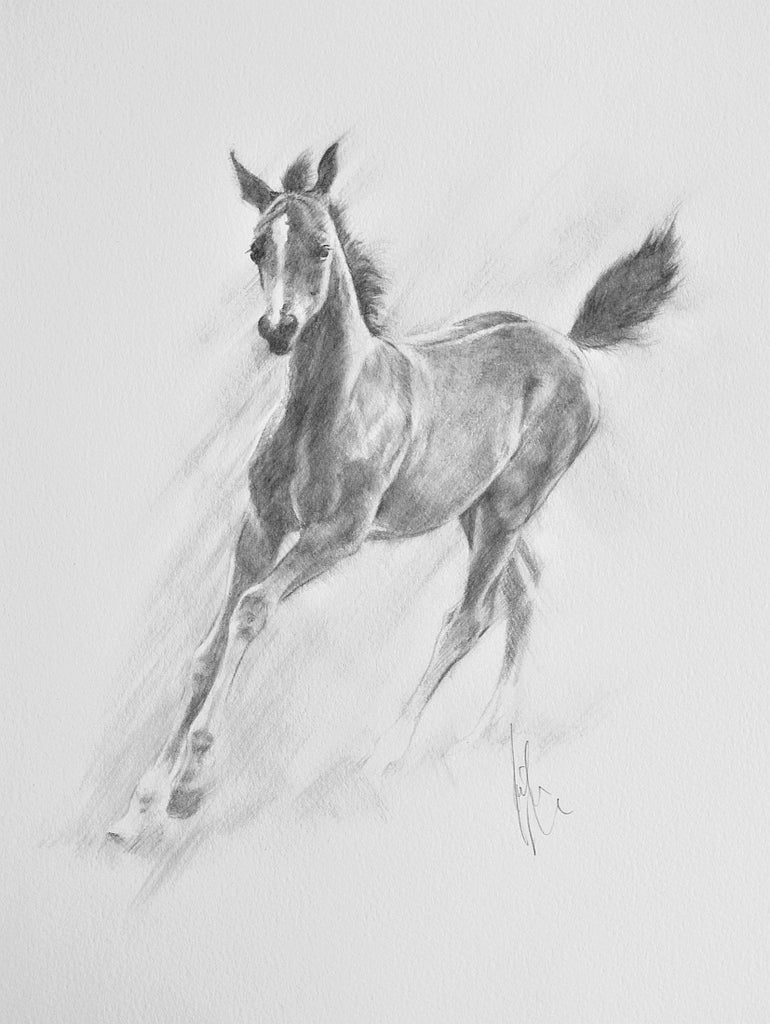 Arab Filly - original pencil drawing by Kristine Nason