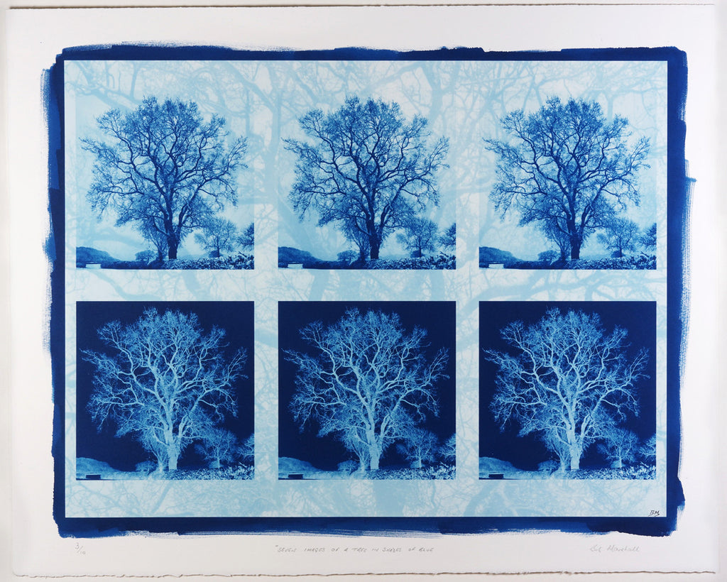 Bob Marshall Seven Images of a Tree