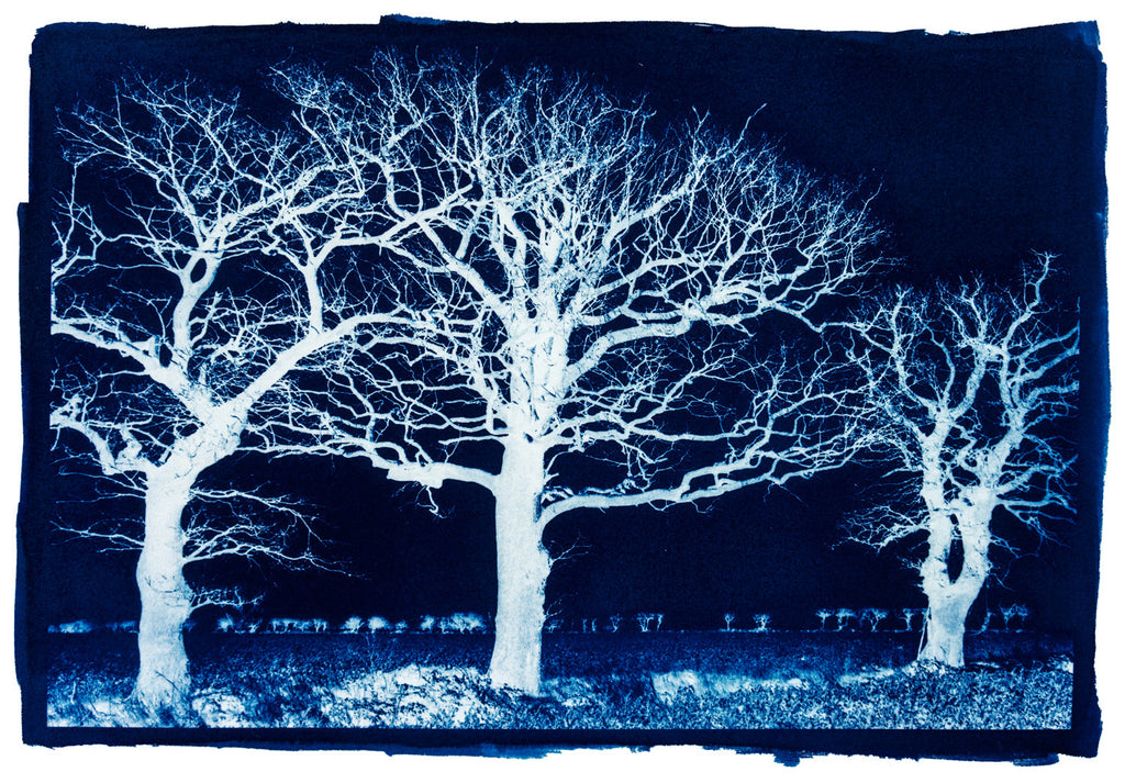 Trees In Blue, Norfolk by Bob Marshall
