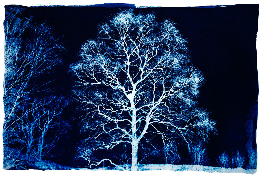 Tree In Blue, Derwentwater by Bob Marshall