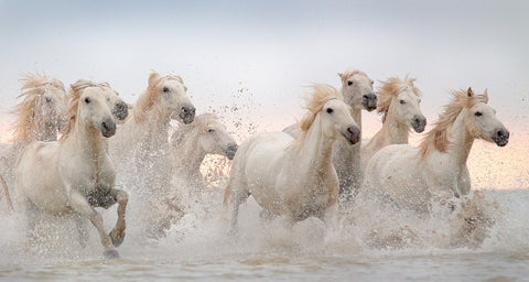 White Horses in the Sunset