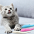 Interactive Cat Toothbrush(Buy 2 Free Shipping)