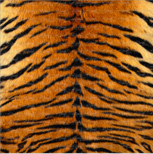 Printed HTV Realistic TIGER STRIPES Pattern Heat Transfer Vinyl 12 x 12