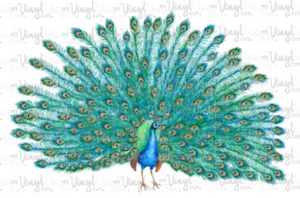 Waterslide Decal Peacock with tail feathers open