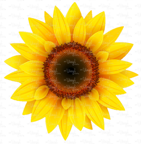 Waterslide Decal Light Sunflower