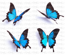 Load image into Gallery viewer, Waterslide Decal Set of 4 Blue Butterflies