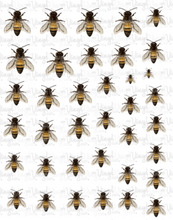 Load image into Gallery viewer, Waterslide Sheet Honey Bees 8 x 10 inch