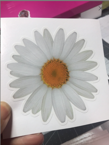 Sticker White Daisy Flower
