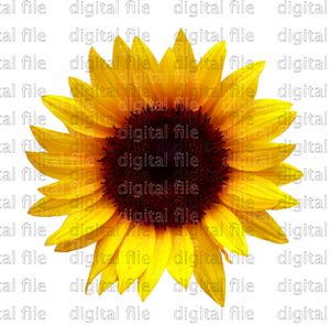 Digital Download Sunflower