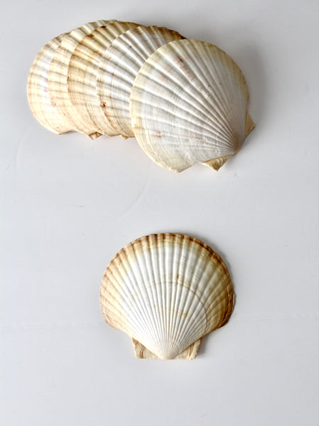 vintage large scallop sea shell
