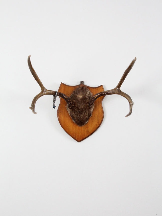 mounted deer antlers with skull circa 1954