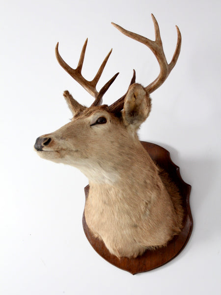 antique deer head mount taxidermy