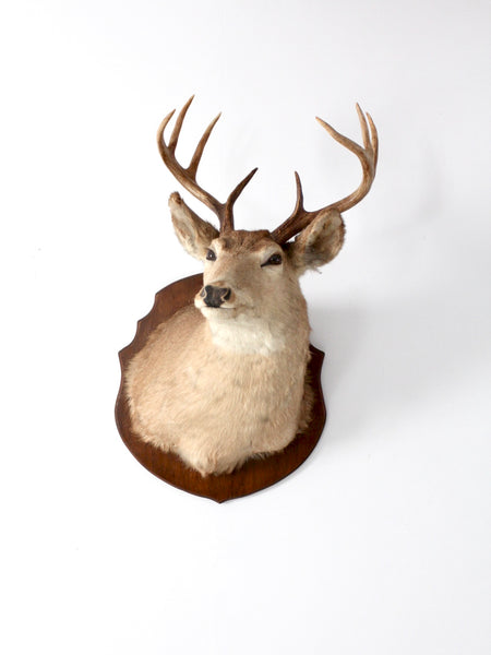 antique deer mount