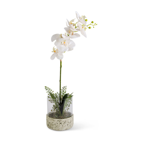White Orchid in Glass Container