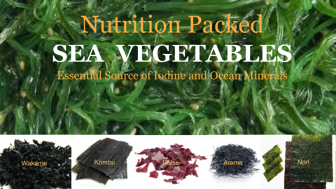 Organic Sea Vegetables