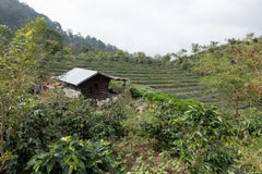 Sumatra Coffee Farm
