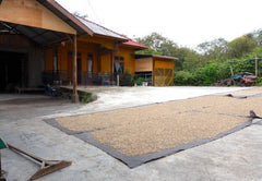 Drying process of our Sumatra Fair Trade Organic