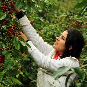 Woman Owned Coffee Farmer Honduras