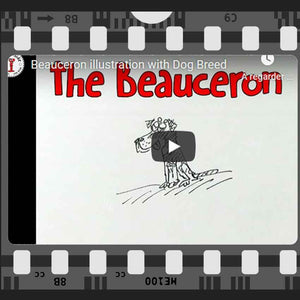 Fun facts about the Beauceron - dog drawing cartoon illustrated