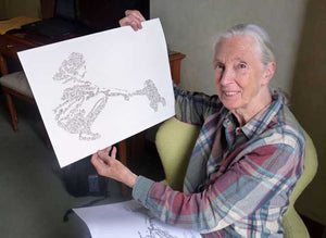 jane goodall is a happy owner of drawinside print