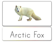 Word List (Arctic)