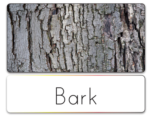 Word List (Tree Parts)