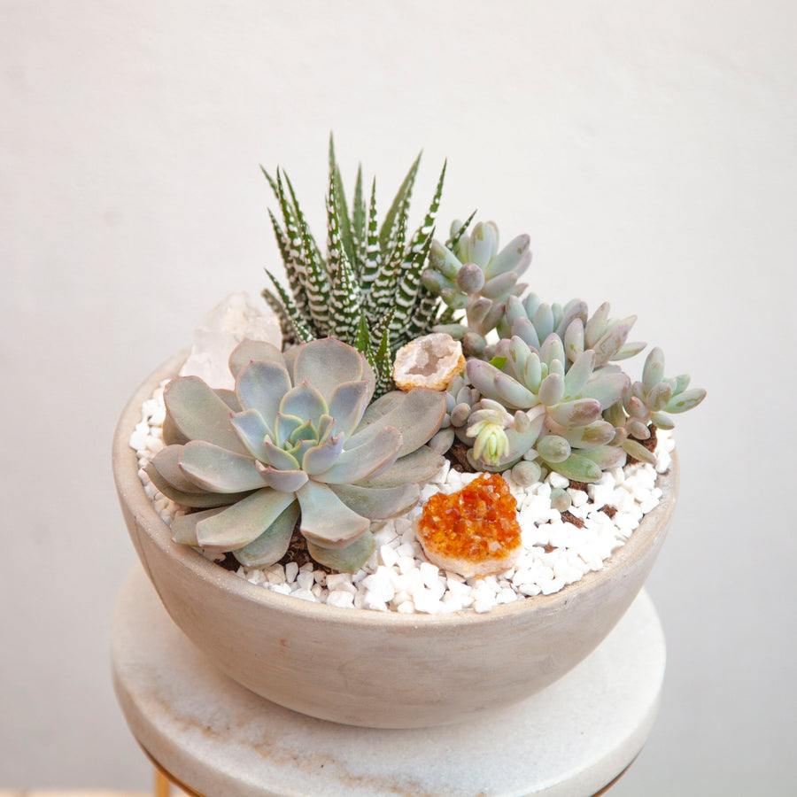 Potted Succulent Bowl