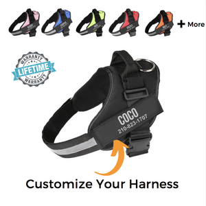 Personalized NO-PULL Harness *LIFETIME WARRANTY*