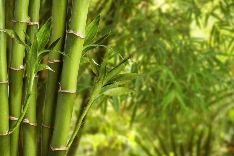Bamboo sheets are significantly more environmentally friendly than other materials.