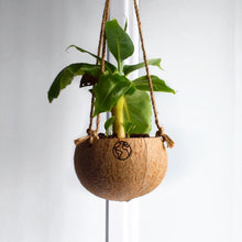 Load image into Gallery viewer, Coconut Hanging Plantpot - Eco Basics Online