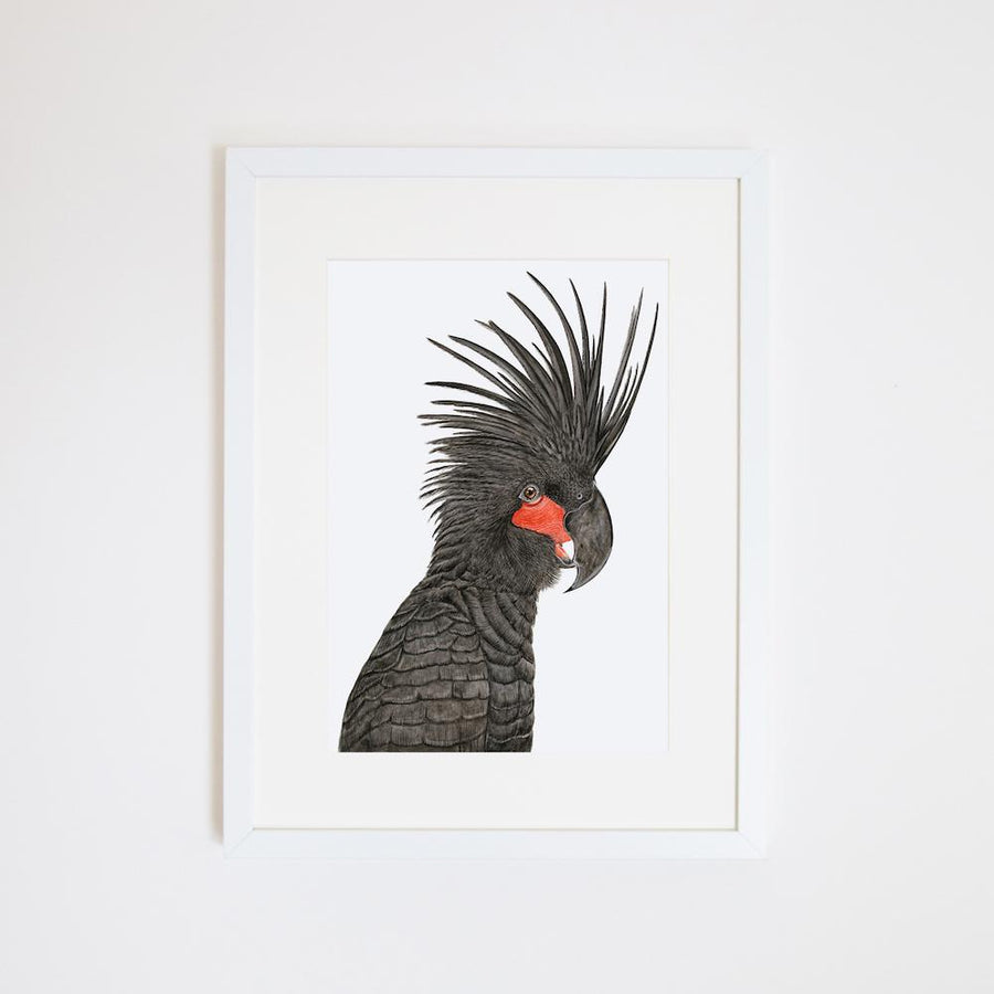 Carlos the Palm Cockatoo Print