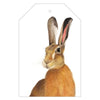 Harry the Hare Gift Tags