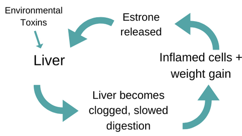 liver-detox-cycle