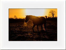 Load image into Gallery viewer, Sunset Horse - Wooden framed print
