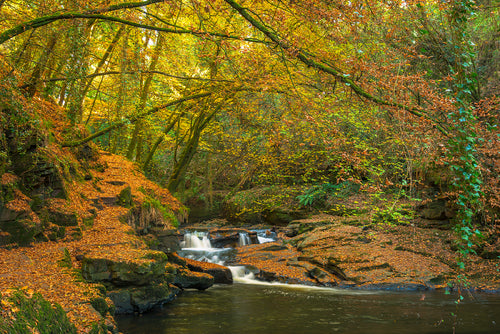 Autumn at the Clare Glens, Co. Tipperary