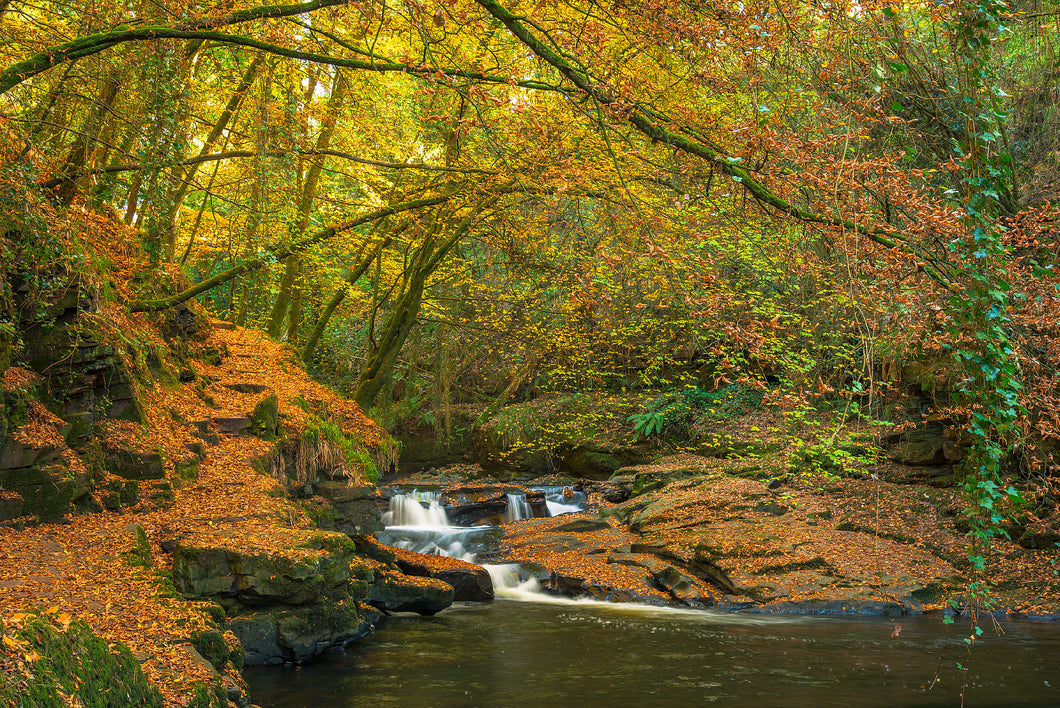 Autumn Leaves Aluminum Print - Clare Glens, Co. Tipperary