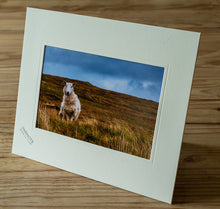Load image into Gallery viewer, Mounted print - Sheep / Ireland